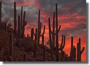 Photo Courtesy of City of Phoenix